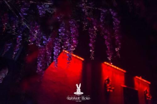 Rabbit Hole Red Lights
